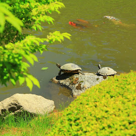 Turtle,sun,friends by Jim Keller - Novices Only Wildlife