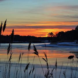 Winter Sunrise by Kevin Taylor - Uncategorized All Uncategorized ( reflection, sky, ice, lake, sunrise, sunrise winter, reeds )