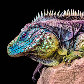 by Judy Rosanno - Animals Reptiles (  )