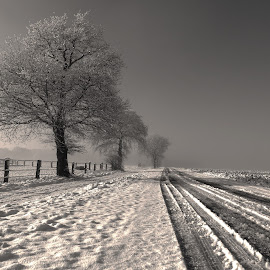 Wintertime by Gert de Vos - Black & White Landscapes