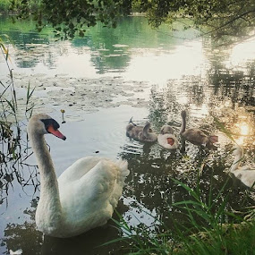 Family:-) by Mirna Abaffy - Instagram & Mobile Instagram