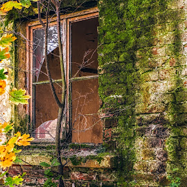 Abandoned building by Opreanu Roberto Sorin - Buildings & Architecture Decaying & Abandoned ( plant, nobody, old, wood, exterior, brick, decline, stone, retro, architecture, house, warehouse, modern, camp, grunge, ancient, empty, dirty, ruins, construction, closeup, black, isolated, building, vintage, texture, green, white, broken, wooden, industrial, pattern, dust, background, factory, abandon, antique, design, wall, decay, abandoned )