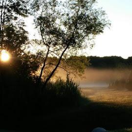 Field of Fog by Melissa Davis - Instagram & Mobile Android ( field, work, fog, cellphone, sunrise )