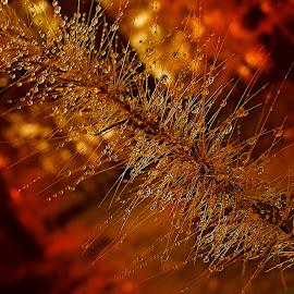 Sleeping Grass by Marija Jilek - Nature Up Close Other plants