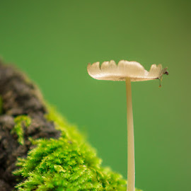 mushroom by Costin Mugurel - Nature Up Close Mushrooms & Fungi ( mushroom, nature, green, summer, forest )