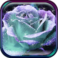 App 3D Rose Live Wallpaper APK for Kindle