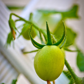 Tomato by Curly Yanni - Nature Up Close Gardens & Produce ( tomat, tomato )