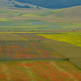 Castelluccio 14 by Bruno Brunetti - Landscapes Prairies, Meadows & Fields ( nature, colors, flowers, italy, castelluccio, fields,  )
