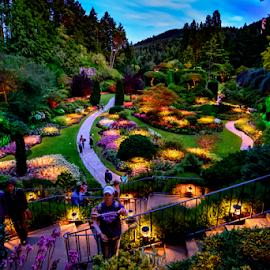 Garden Lights by Darren Sutherland - City,  Street & Park  City Parks