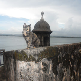 Stray cat In Puerto Rico by Carlito Rivera - Animals - Cats Portraits ( water, cats, puerto rico, el moro, color,  )