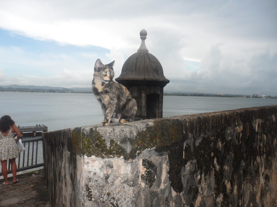 Stray cat In Puerto Rico by Carlito Rivera - Animals - Cats Portraits ( water, cats, puerto rico, el moro, color )