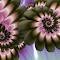 Featherfan8ic1.jpg