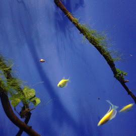 by Nora-Jean Scarpa Watkins - Animals Fish