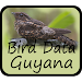 Bird Data - Guyana Icon