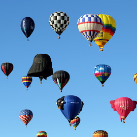 The Big Show by Abbey Gatto - Transportation Other ( albuquerque, hot air balloon fiesta, transportation, balloons, new mexico )
