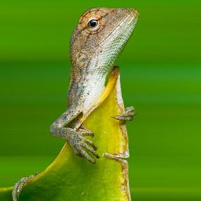 Besides by Pak Lang - Animals Reptiles ( macro, green, malaysia, closeup, animal,  )