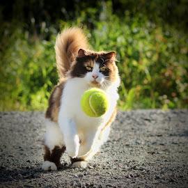 Got it! by Jane Bjerkli - Animals - Cats Playing