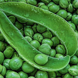 Dave's Peas by Gwen Paton - Food & Drink Fruits & Vegetables ( green, peas in shell, vegetable, garden, peas )