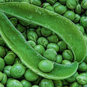 Peas in topaz-DSCF6795.jpg