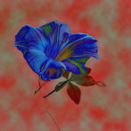 Blue Bells by Prasanta Das - Digital Art Things ( modification, blue bells, digital )