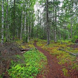An enchanted forest!. by Anthony Goldman - Landscapes Forests ( nature, grass, alaska, trees, landscape )