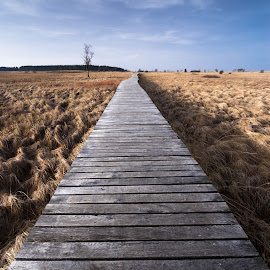 Wooden walk by Nicolas Van Weegen - Landscapes Prairies, Meadows & Fields ( nobody, ardennes, concept, wood, simple, belgique, yellow, landscape, nature, forward, trail, empty, path, grating, hautes, grass, fagnes, caillebotis, hautes-fagnes, belgium, winde angle, winter, wooden, low, wooden grating, go )