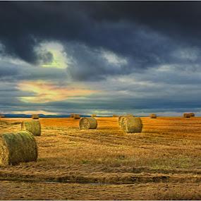 by Stephen Hooton - Landscapes Prairies, Meadows & Fields