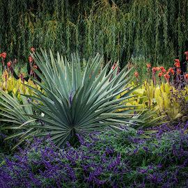 Garden Rhythm  by Jon Kinney - Flowers Flower Gardens