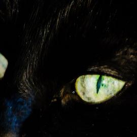 The Eyes Of The Feline by Sylvia Meier - Animals - Cats Portraits ( cat, macro, yellow, black, animal, eyes )