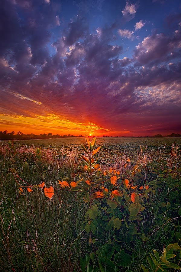 Since The Dawn Of Time by Phil Koch - Landscapes Prairies, Meadows & Fields ( vertical, arts, travel, yellow, love, sky, nature, shadow, weather, flowers, light, trending, colors, twilight, art, mood, horizon, journey, forest, rural, portrait, country, dawn, environment, season, serene, popular, outdoors, lines, natural, inspirational, hope, canon, wisconsin, joy, landscape, sun, photography, life, emotions, dramatic, horizons, inspired, clouds, office, heaven, green, camera, beautiful, scenic, living, morning, woods, shadows, field, fineart, unity, blue, sunset, peace, meadow, sunrise, earth )