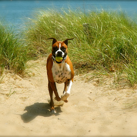 Fun Time at the Beach by Rob Kovacs - Animals - Dogs Running