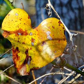 Heart Felt by David Walters - Nature Up Close Trees & Bushes ( leaf, sony hx400v, gulf coast community college )