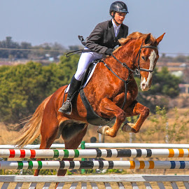 Showjumping by Dirk Luus - Sports & Fitness Other Sports ( rider, equine, jumping, horse, showjumping, equestrian )