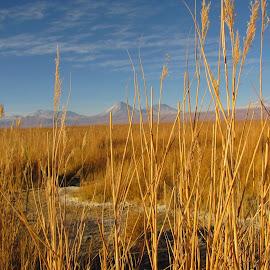 Atacama by Marina Gallo - Landscapes Deserts ( atacama )