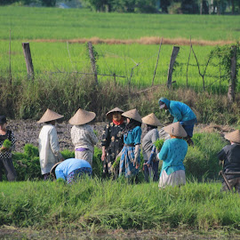 Paddy replant discussed. by Deny Afrian Wahyudi - People Portraits of Women ( farmland, traditional, women, travel photography, destination )