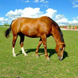 by Wendy Schultz - Animals Horses