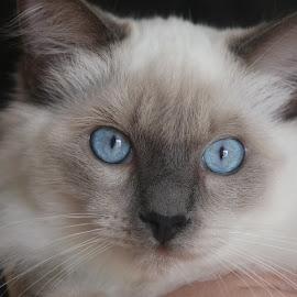 by Mellissa Flynn - Animals - Cats Kittens