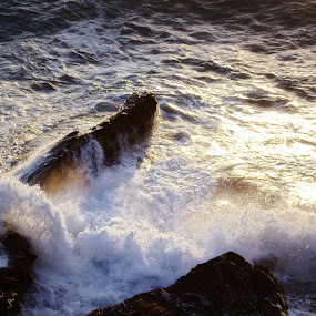 wave crashing at sunset by Donatella Tandelli - Landscapes Sunsets & Sunrises ( water, wild, sprays, splash, poetic, romantic, ocean, seascape, sunlight, ligurian sea, transparency, liquid, nature, sunset, wave, wet, italy, rocks, foam, crash, stormy sea )