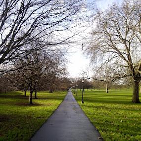 Primrose Hill by Emilie Robert - Instagram & Mobile Other ( hill, uk, winter, london, park, tree, primrose, ballad, city )