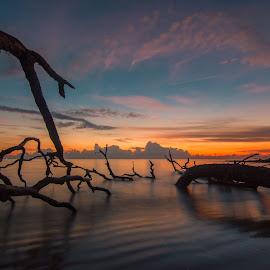 Driftwood Peace by George Varkanis - Landscapes Sunsets & Sunrises ( water, beautiful, beach, landscape, photo, photography, sun, amazing, driftwood, wow, nature, sunset, photographer, cloud, sunrise, nikon )