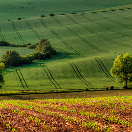 Green fields by Klaus Müller - Landscapes Prairies, Meadows & Fields ( green, landscape, fields )