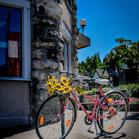 Idle Flowered Cycle by Kevin Pastores - Transportation Bicycles ( idle, bike, happy, pink, flowers, alone )