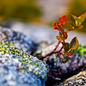 Close up on green plant by Fredrik A. Kaada - Nature Up Close Rock & Stone ( plant, orange, colorful, bright, colors, green, white, stone, close-up, red, details, nature, color, blue, background, dark, focus, blurry, light, black )