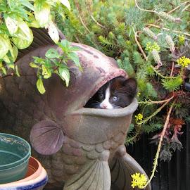 Garden moment :) by Brenda Baird - Animals - Cats Kittens