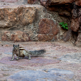 King at his throne by Akashneel Banerjee - Instagram & Mobile Other ( nature, fast, close up, squirrel, animal )