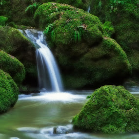 Mossy Green by Thomas Born - Nature Up Close Water ( water, nature, waterfall, creek, , film, vintage, camera )