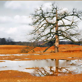 AGED REFLECTIONS by Joseph T Dick - Landscapes Prairies, Meadows & Fields ( trees, reflections, landscapes, fields )