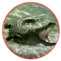 Game Real Crocodile Attack 2017 APK for Kindle