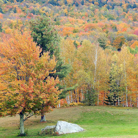 New York in Fall by Dawn Hoehn Hagler - Nature Up Close Trees & Bushes ( fall colors, autumn, fall, trees, new york )