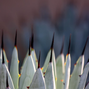 Spikes by Ruth Jolly - Nature Up Close Other plants ( desert, nature, agave, desert plant, southwest, arid, west,  )